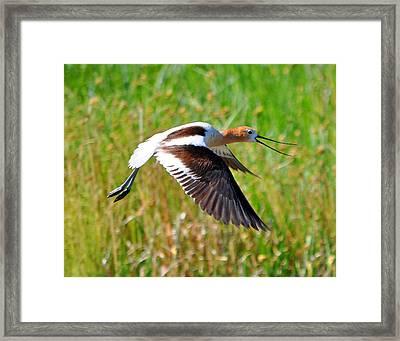 Framed Print featuring the photograph Noisy Bird by Lula Adams
