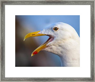 Framed Print featuring the photograph Noisy One by Dale Nelson