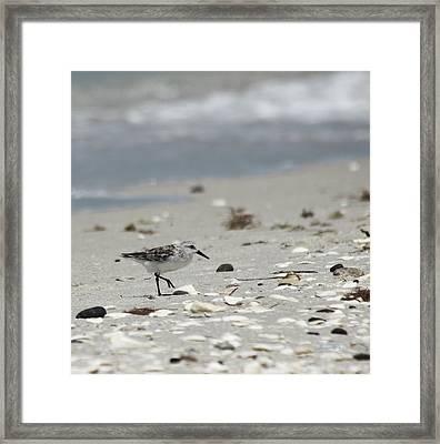 Nokomis Beach Piper Framed Print