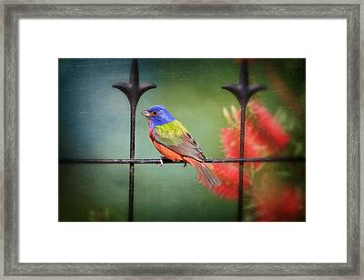 Nonpareil En Louisiane Framed Print by Bonnie Barry