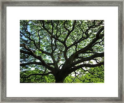 Noon Day Light Framed Print by Craig Wood