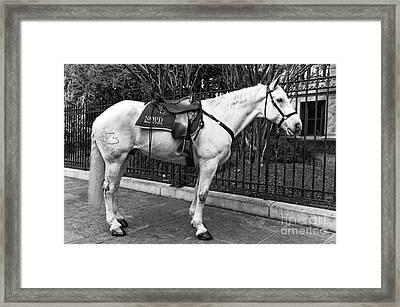 Nopd Horse Mono Framed Print by John Rizzuto