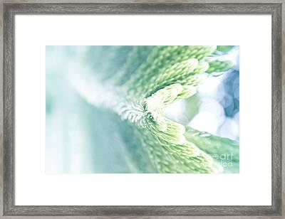Norfolk Island Pine - Araucaria Heterophylla - Pastels Ultra Soft Aquamarine And Mint Green  Framed Print by Sharon Mau