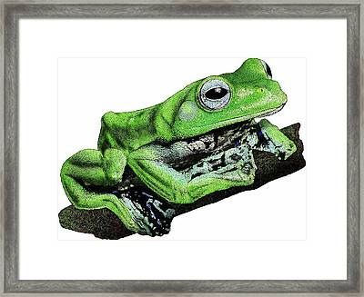 Norhayatis Flying Frog Framed Print by Roger Hall