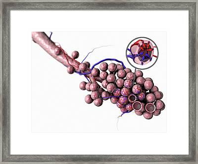 Normal Alveoli Framed Print by Gunilla Elam