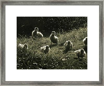 Framed Print featuring the photograph Normandy Invasion 1944  by Meir Ezrachi