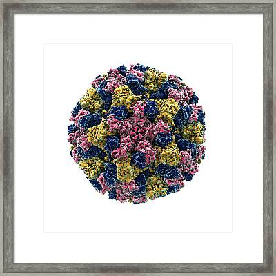 Norovirus Particle Framed Print