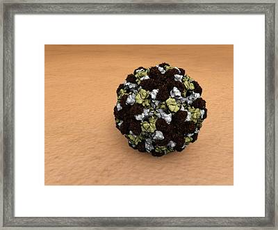 Norovirus Particles Framed Print