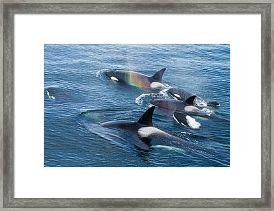 North America, Usa, Alaska, Frederick Framed Print by Joe and Mary Ann Mcdonald