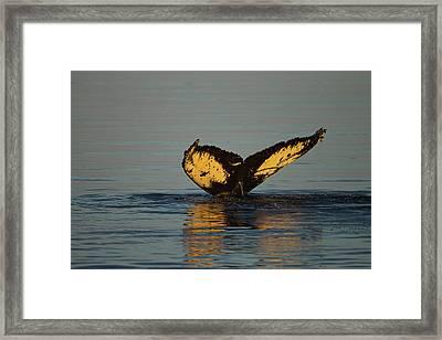 North America, Usa, Alaska, Fredrick Framed Print