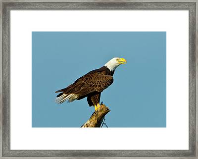 North America, Usa, Florida, North Fort Framed Print by Bernard Friel