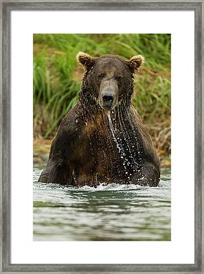 North America, Usa, Sw Alaska Framed Print by Joe and Mary Ann Mcdonald