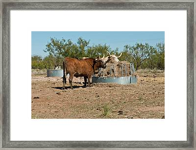 North America, Usa, Texas, Panhandle Framed Print by Bernard Friel