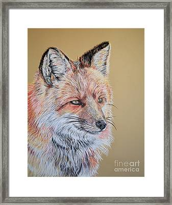 North American Red Fox Framed Print by Ann Marie Chaffin