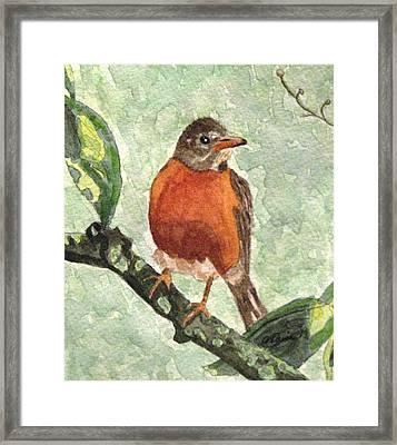 North American Robin Framed Print by Angela Davies