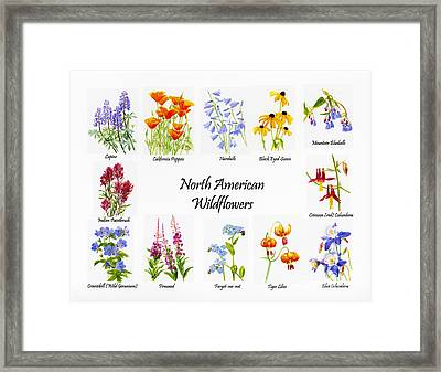 North American Wildflowers Poster II Framed Print