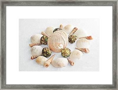 North Carolina Circle Of Sea Shells Framed Print by Andee Design