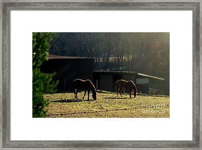 North Carolina Morning Framed Print by Bill OConnor