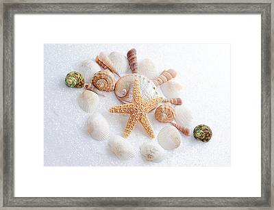 North Carolina Sea Shells Framed Print by Andee Design