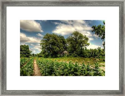 North Carolina Tobacco Farm Framed Print by Benanne Stiens