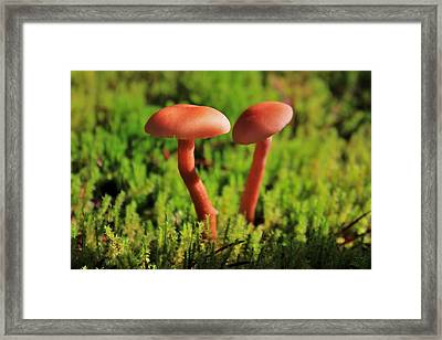 North Cascades Mushrooms Framed Print by Benjamin Yeager
