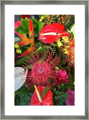 North Kohala Kamehameha Day Framed Print