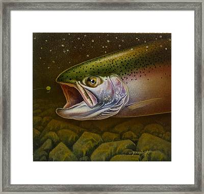 North Shore Steelhead Framed Print by Jon Q Wright