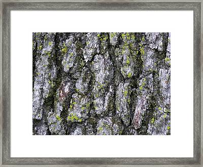 North-side Oak Bark Framed Print