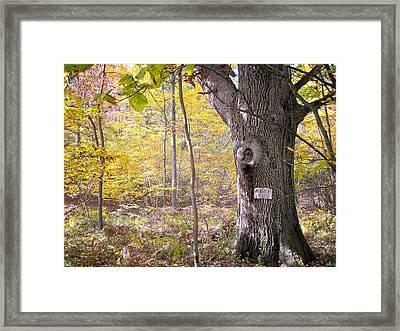 North Woods Guardian Framed Print by Mary Lee Dereske