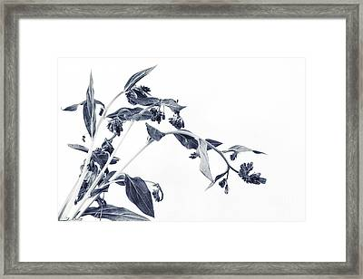 Northern Bluebells II Framed Print by Priska Wettstein