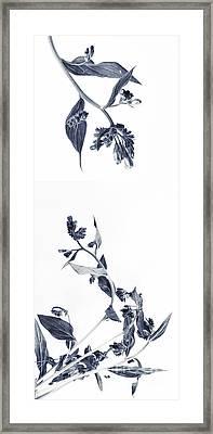Northern Bluebells Framed Print