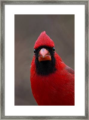 Northern Cardinal - 6393 Framed Print