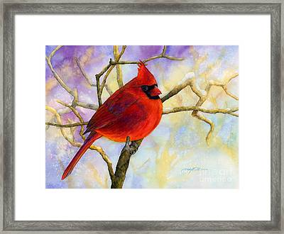 Northern Cardinal Framed Print by Hailey E Herrera