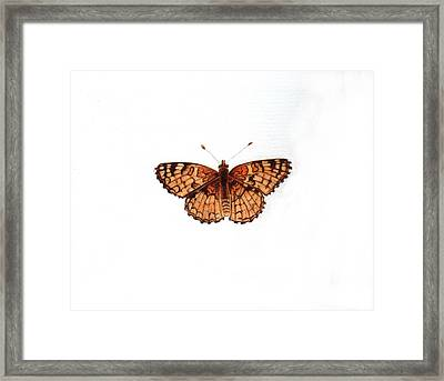 Northern Checkerspot Butterfly Framed Print by Inger Hutton