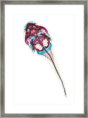 Northern Clingfish Framed Print by Adam Summers