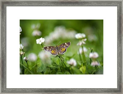 Northern Crescent Butterfly Framed Print by Christina Rollo