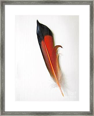 Northern Flicker Tail Feather Framed Print