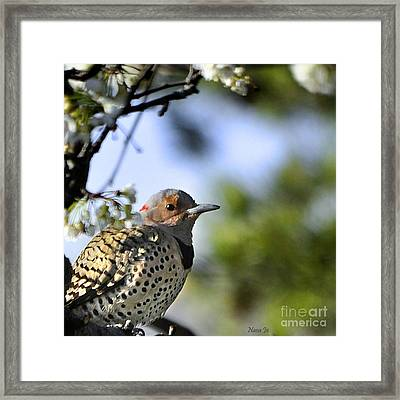 Northern Flicker Woodpecker Framed Print by Nava Thompson