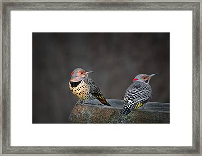 Northern Flickers Framed Print