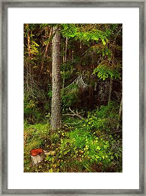 Northern Forest 1 Framed Print by Jenny Rainbow