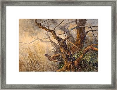 Northern Harrier Framed Print by Floy Zittin