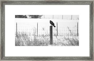Northern Harrier Framed Print by Tracy Winter