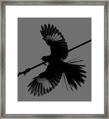 Framed Print featuring the photograph Northern Mockingbird by Leticia Latocki