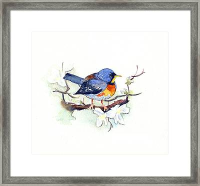 Northern Parula Framed Print by Katherine Miller