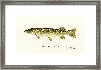 Northern Pike Framed Print