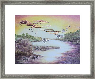 Northern Pintails At Sunset Framed Print