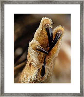 Northern Saw-whet Owl Foot Framed Print by Us Geological Survey
