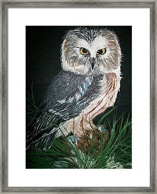 Northern Saw-whet Owl Framed Print by Sharon Duguay