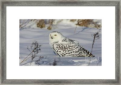 Northern Spirit- Snowy Owl Framed Print by Inspired Nature Photography Fine Art Photography