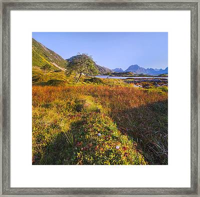 Northern Sunset Framed Print